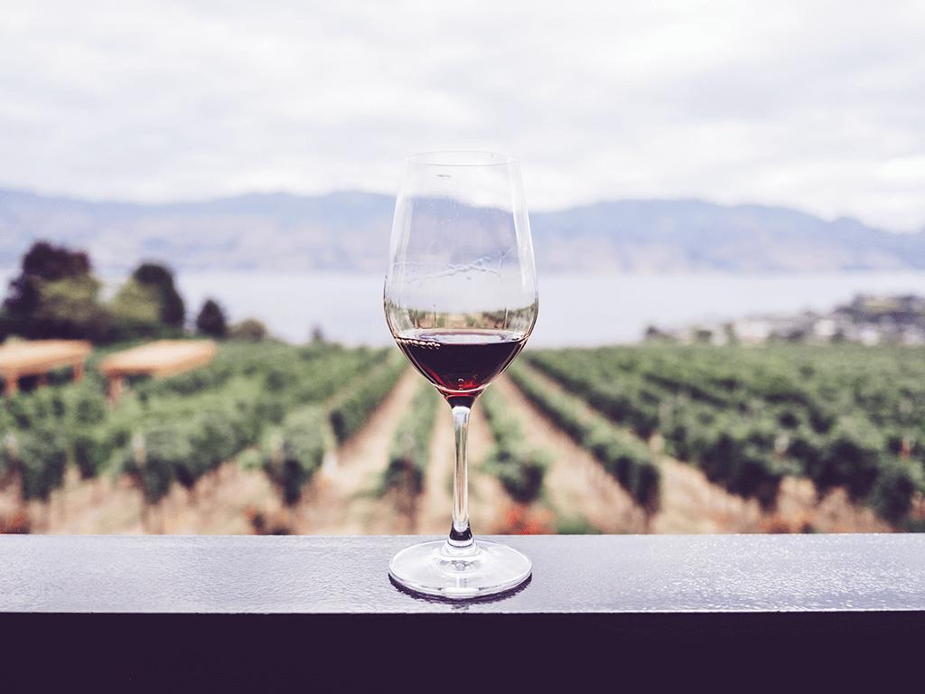 Verre de vin rouge face à un paysage de vignes.
